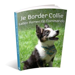 Op deze foto zie je de bonus: Je border collie laten komen op commando van het ebook Border Collie Geheimen